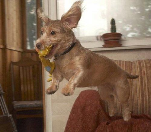 Классные фото собак (20 фото)