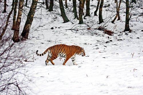 2010 - год Тигра (24 фото)