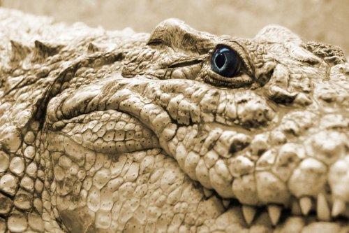 Фото Сайт - крокодил - Раздел животные - Photosight.ru.