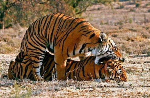 Любовь животных (18 фото)