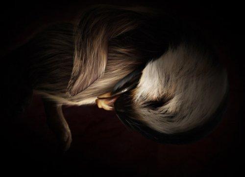 Животные в утробе (11 фото)