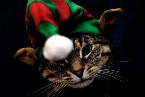Рождественские животные (24 фото)