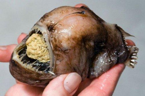 Подводные ужастики (27 фото)