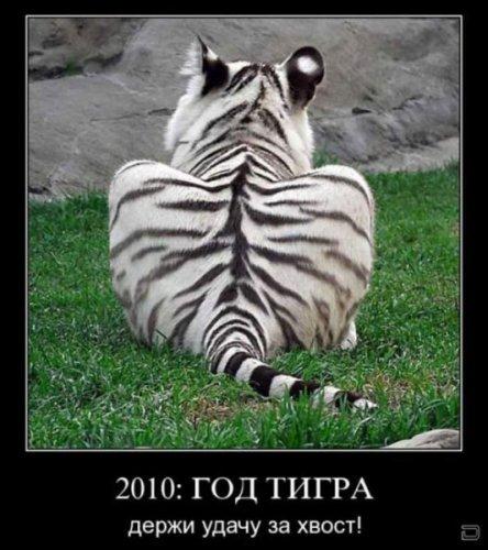 Демотиваторы про животных (16 фото)