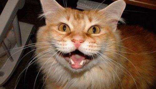 Животные тоже умеют смеяться (18 фото)