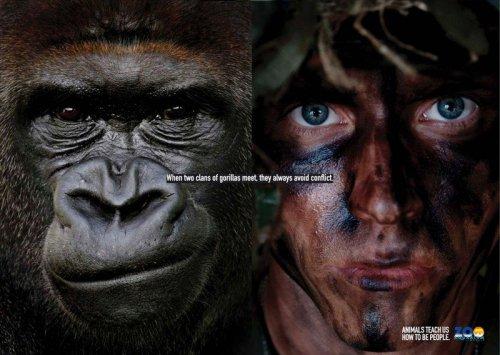 Животные научат нас быть людьми (6 фото)