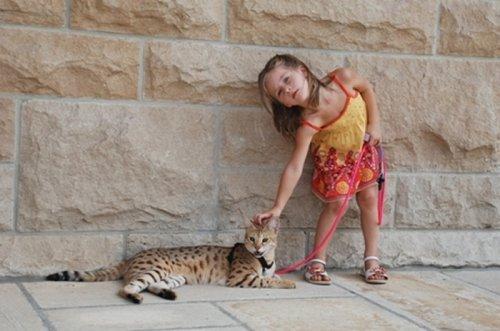 Гигантская кошка (11 фото)
