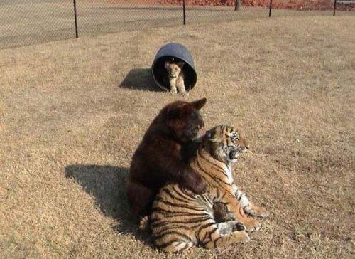 Необычная дружба (16 фото)