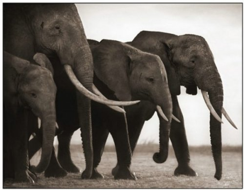 Природа Африки от Ника Брандта (18 фото)