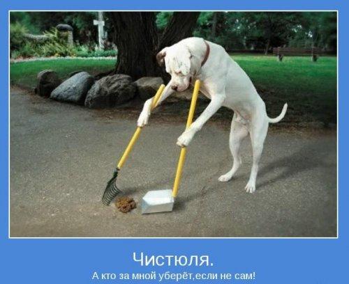 Мотиваторы про животных (17 фото)