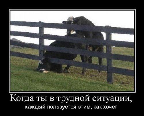 Демотиваторы про животных (29 фото)