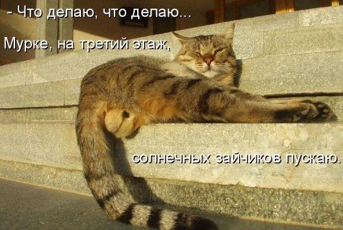 Кошачий позитив с надписями (25 фото)