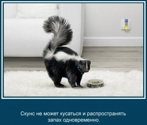 Забавные факты про животных (24 фото)