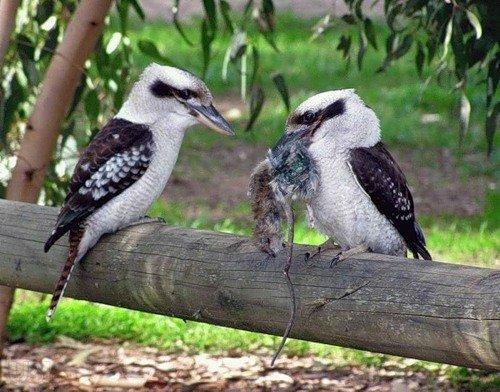Фото про любовь у животных и птиц (34 фото)