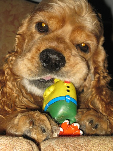 Зверюшки и игрушки. 2 часть. (25 фото)
