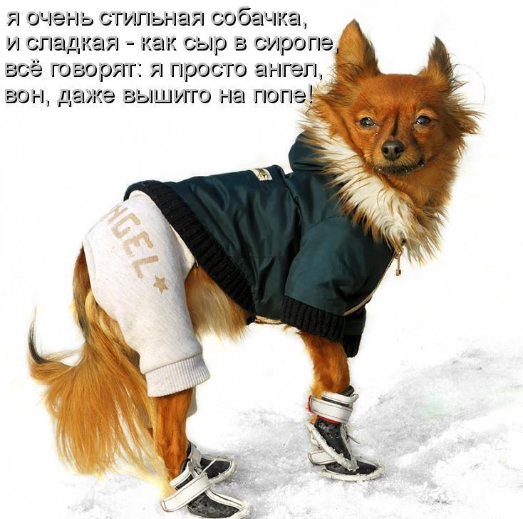 Днем, новые картинки про собак с надписями