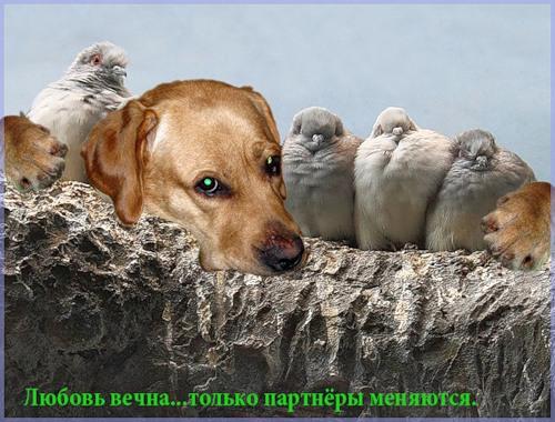 Высказывания от животных (26 фото)