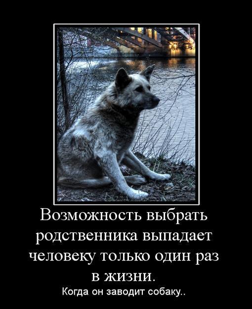 демотиваторы про собак цитаты