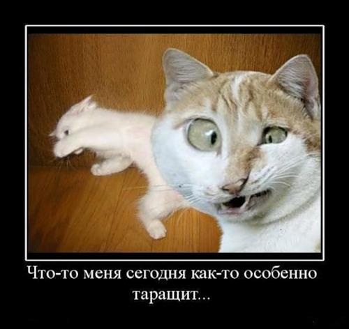 Демотиваторы про животных (20 фото)