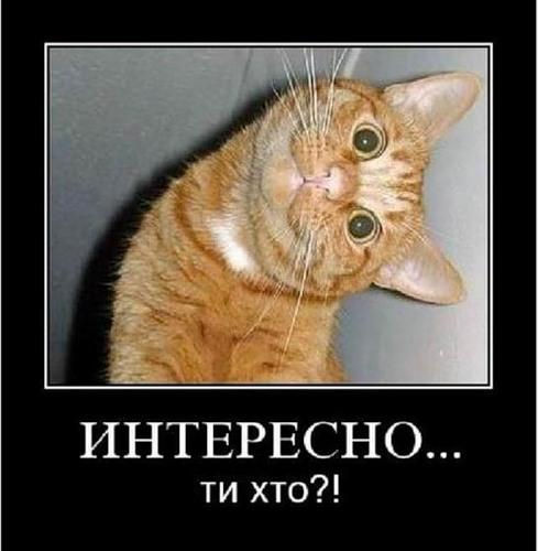 → демотиваторы про животных 20 фото