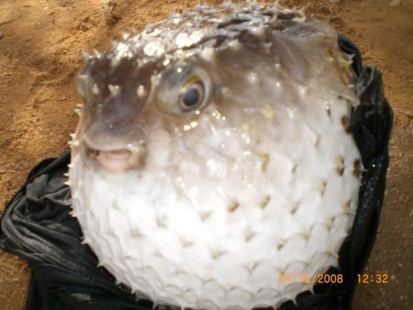 рыба грустная фото