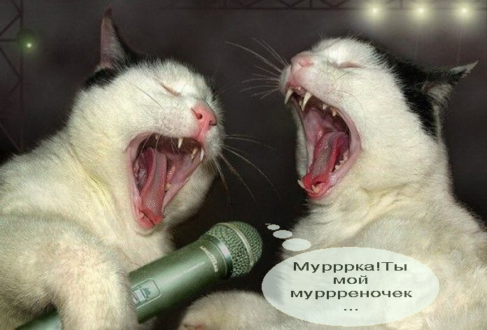http://klopik.com/uploads/posts/2010-02/1265994912_1265630184_40.jpg