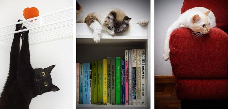 Коты в дизайне интерьера