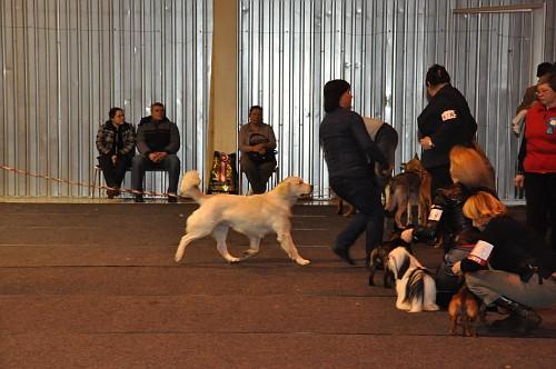 Выставка собак (48 фото)