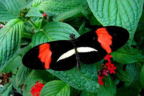 Бабочки-летнее чудо (22 фото)