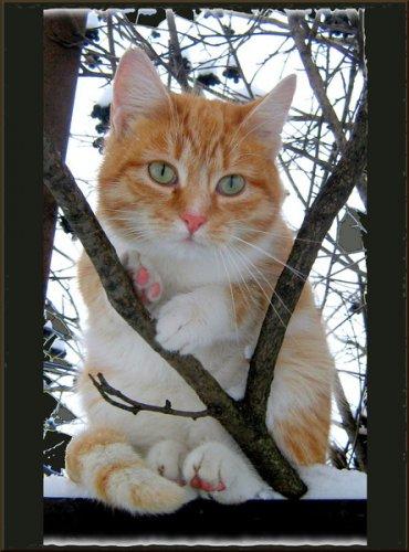Язык тела кошек (27 фото)