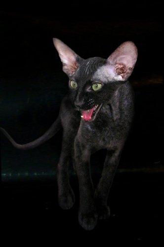 Чёрные и белые кошки (20 фото)
