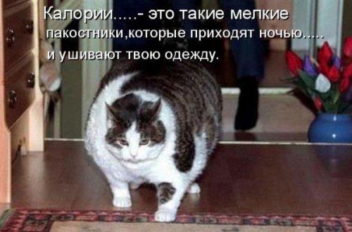 Весёлая котоматрица (28 фото)