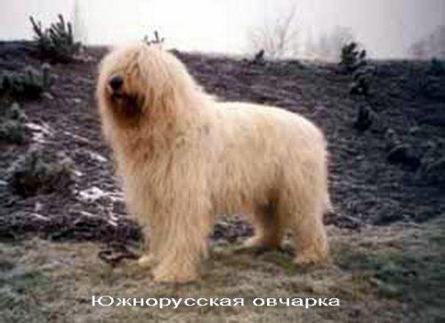 Собаки разных пород (46 фото)