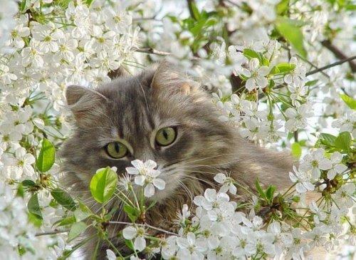 Забавные котята (25 фото)
