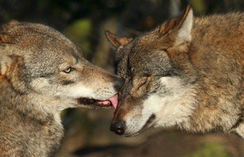 Прекрасные фотографии животных  (20 фото)