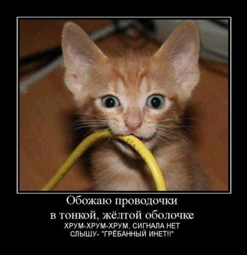 Весёлая котоматрица (26 фото)