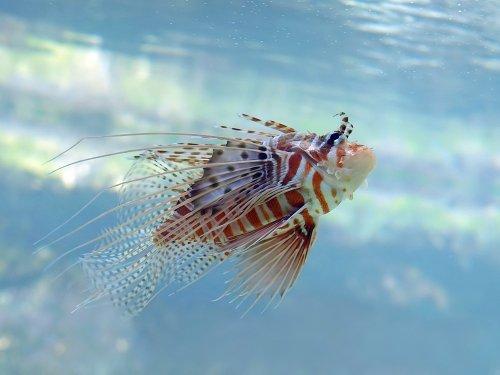 Подводный мир моими глазами, часть I (10 фото)
