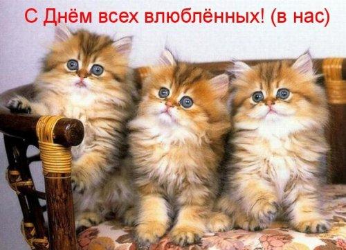 Весёлая котоматрица (25 фото)