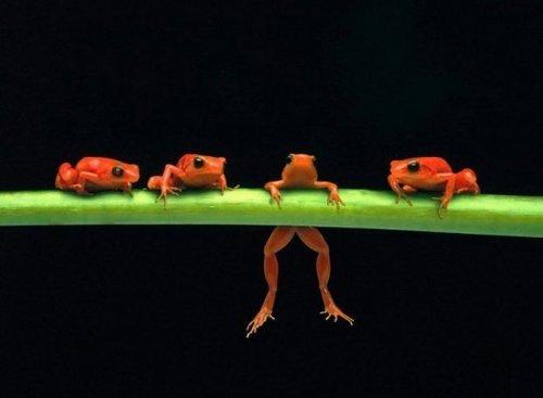 Забавные лягушки (12 фото)