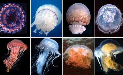Прозрачные животные (13 фото)