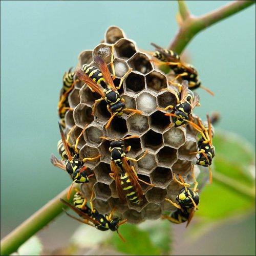 Маленький мир насекомых глазами фотографов (40 фото)