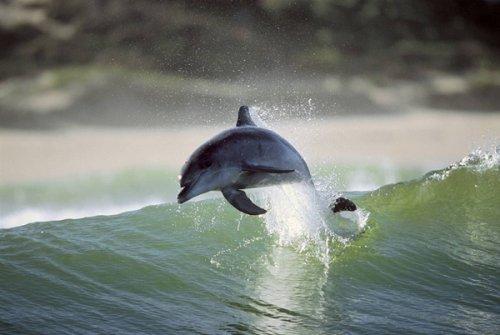 Танцы дельфинов (17 фото)
