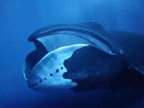 Интересно о китах (20 фото+видео)