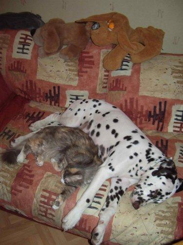 Спят усталые зверюшки (40 фото)