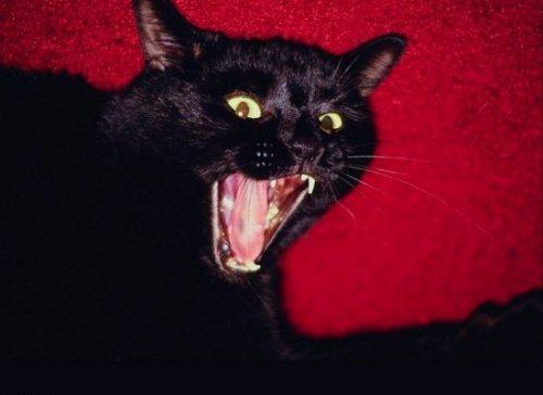 Кошачий язычок (30 фото)