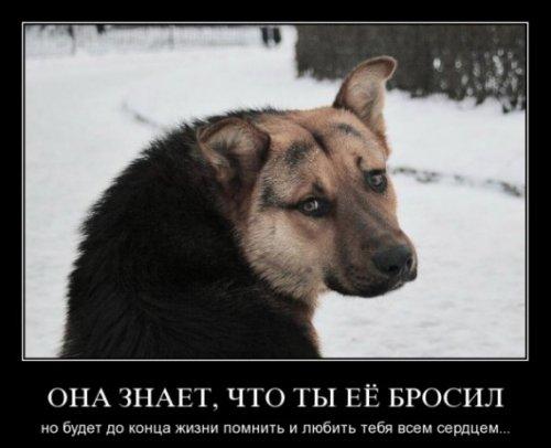 Демотиваторы про животных (26 фото)