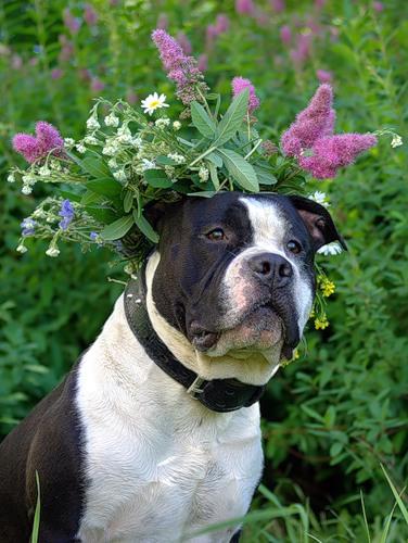 Животные и цветы (25 фото)