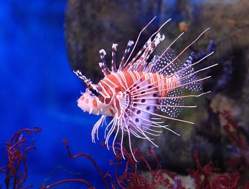 Экзотический гламур моря (27 фото)
