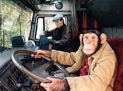 Водители (28 фото)