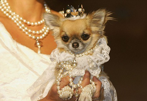 Свадебные наряды для животных (16 фото)